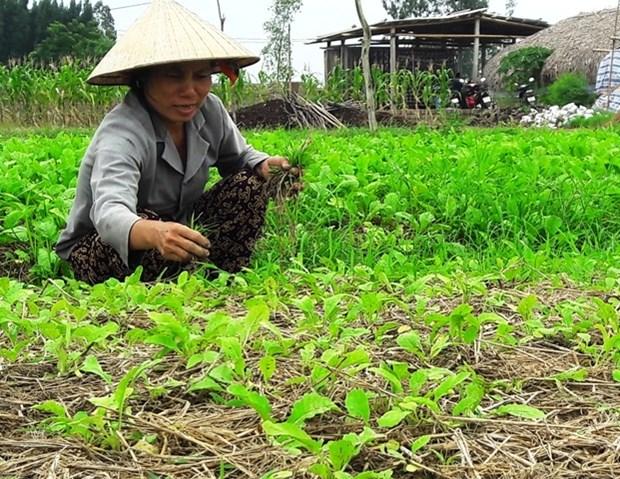 清化省下拨90万美元 协助农民恢复灾后生产 hinh anh 1