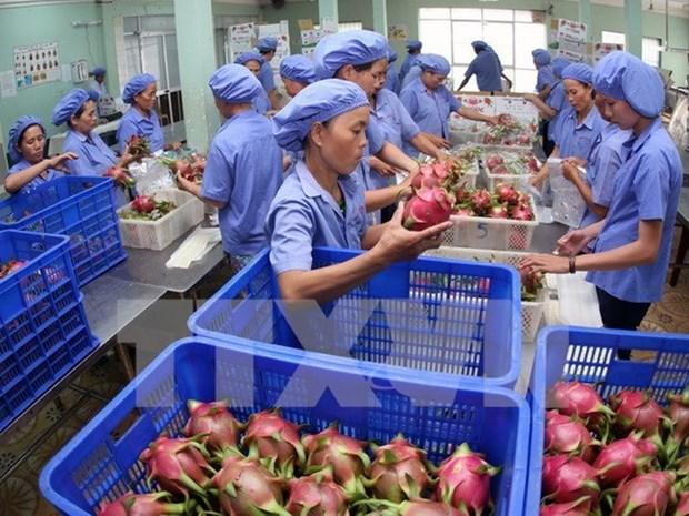 今年前10月越南果蔬出口总额约达28.4亿美元 hinh anh 1
