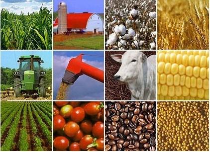 越南与巴西农业与旅游合作潜力巨大 hinh anh 1