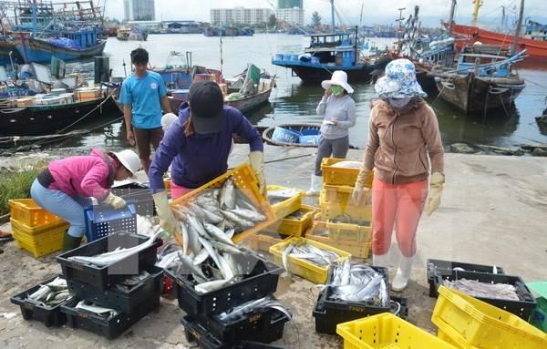 今年前10个月越南水产品出口额约达67.3亿美元 hinh anh 1