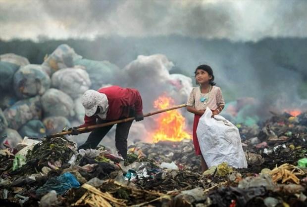 越南作品在国际环境摄影师大赛中荣获一等奖 hinh anh 1
