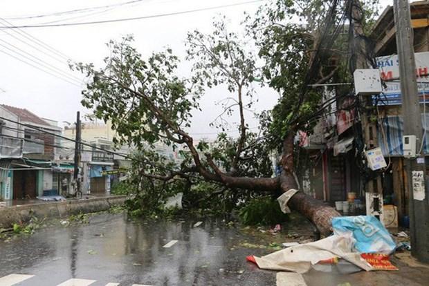 王廷惠:不让商贩利用自然灾害借机涨价 hinh anh 2