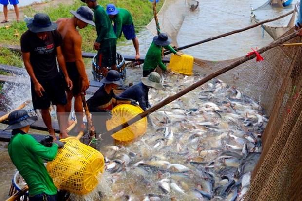 越南参加在阿尔及利亚举行关于渔业与水产养殖业的国际展会 hinh anh 1
