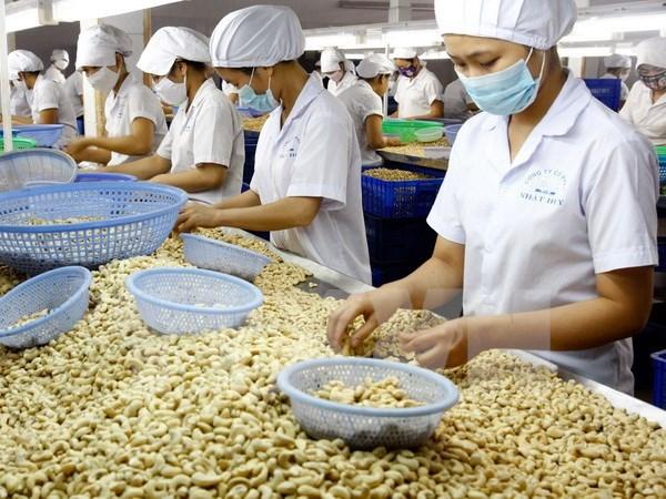 越南腰果产业努力保持世界第一腰果出口国的地位 hinh anh 1