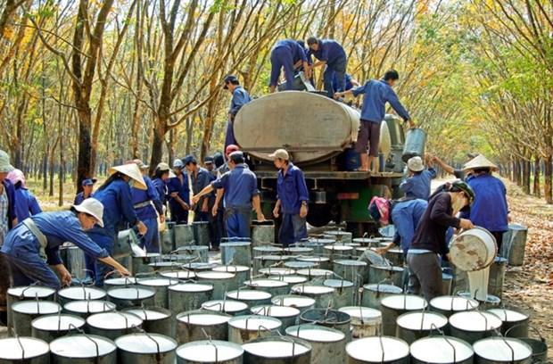 政府总理批准越南橡胶工业集团2016—2020年经营生产计划 hinh anh 1