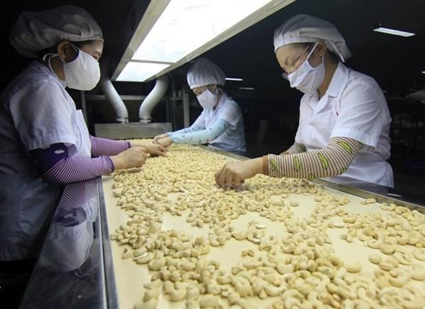 越南腰果仁出口位居世界第一 hinh anh 1