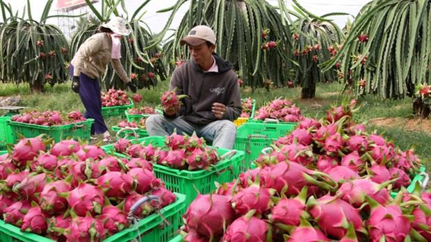 越南扩大蔬果出口 hinh anh 1