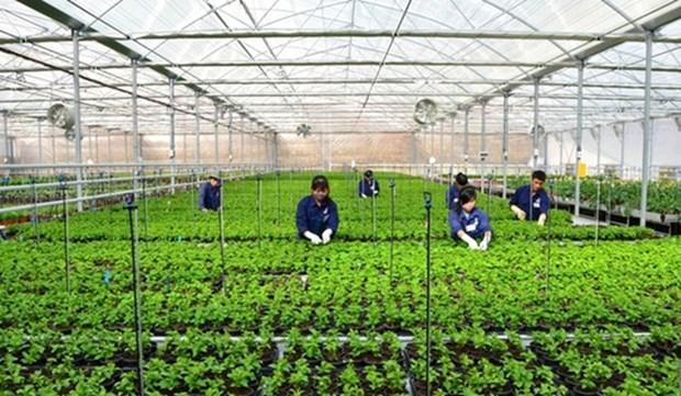海防市进行高科技农业区规划 hinh anh 1