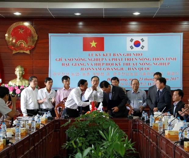 后江省与韩国全罗南道 -光州农业技术协会加强农业合作 hinh anh 1