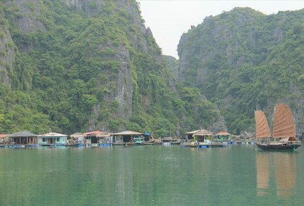 广宁省努力保护与弘扬下龙湾渔村特色的文化价值 hinh anh 1