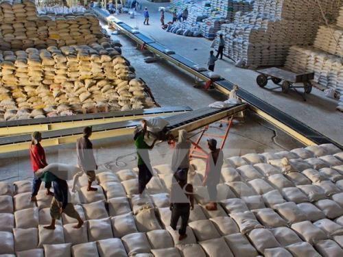 阿根廷希望加大对越的粮食出口力度 hinh anh 1
