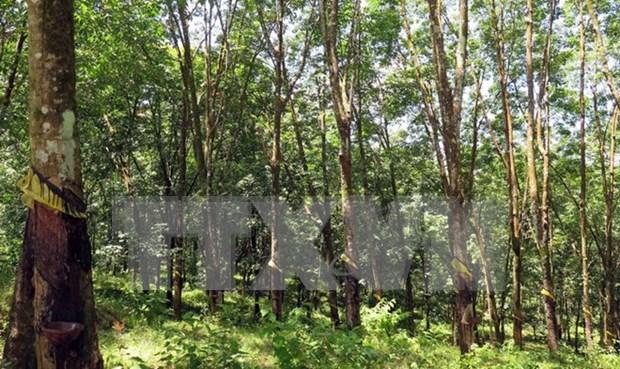越南广治有限责任公司与老挝政府签署橡胶种植土地租赁合同 hinh anh 1
