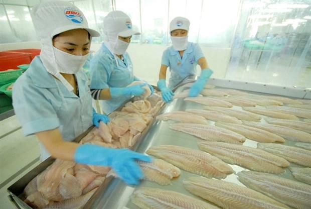 越南努力加大对欧盟查鱼出口力度 hinh anh 1
