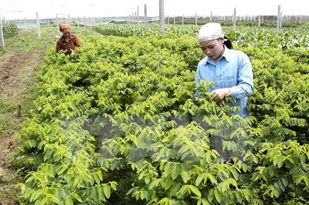 韩国投资商拟在河南省投资农产品生产和加工项目 hinh anh 1