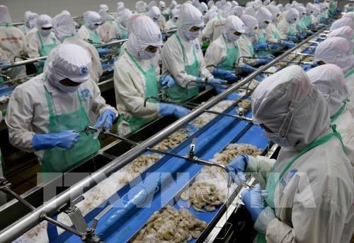 越南批准紧急措施实施计划 克服欧洲委员会对IUU的警告 hinh anh 1