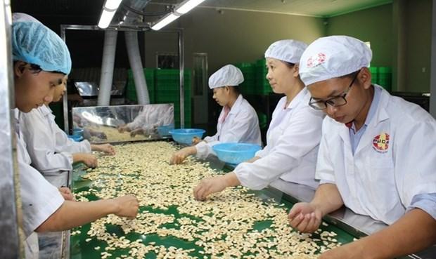 柬埔寨成为越南腰果原料第五大供应国 hinh anh 1