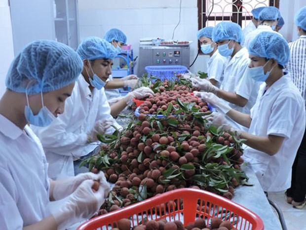越南寻找措施推动水果出口外销 hinh anh 1