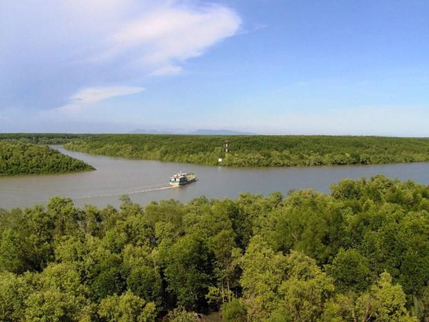 金瓯省采取措施来保护沿海防护林 hinh anh 1