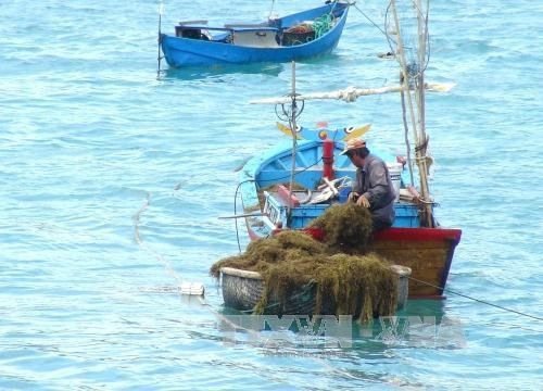 越南海岛:推动海洋经济发展与保障国防安全相结合 hinh anh 3
