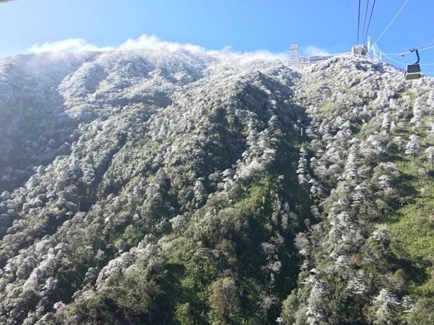 大雪覆盖番西邦峰 许多牲畜被冻死 hinh anh 2