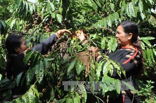 越南西原地区经济社会保持增长势头 hinh anh 1