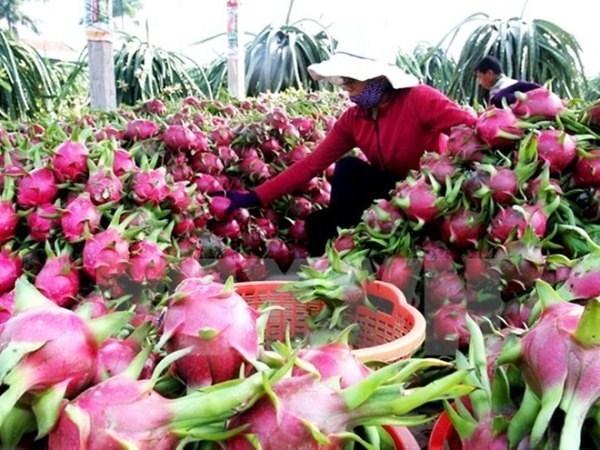 越南蔬果出口创奇迹 首次超越原油出口额 hinh anh 1