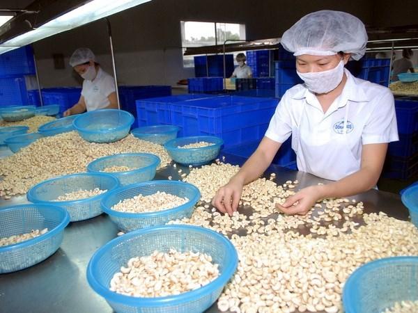 2017年越南腰果出口额约达35亿美元 hinh anh 1