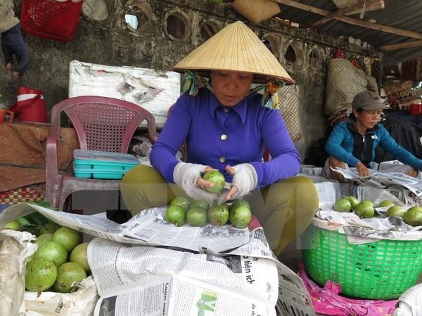 前江省公布向美国市场出口首批新鲜金星果 hinh anh 1