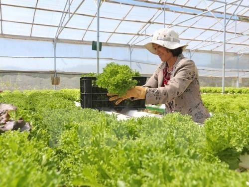 茶荣省提出9大措施来推动2018年经济社会发展 hinh anh 1