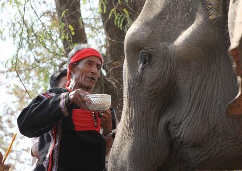莫侬族的大象祭拜习俗 hinh anh 1