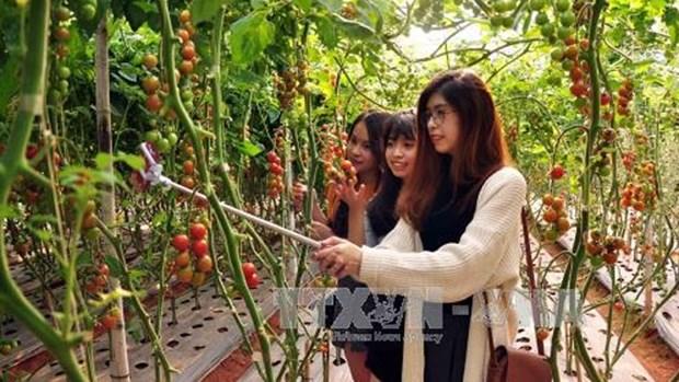 越南大叻市农业旅游颇具游客的青睐 hinh anh 1