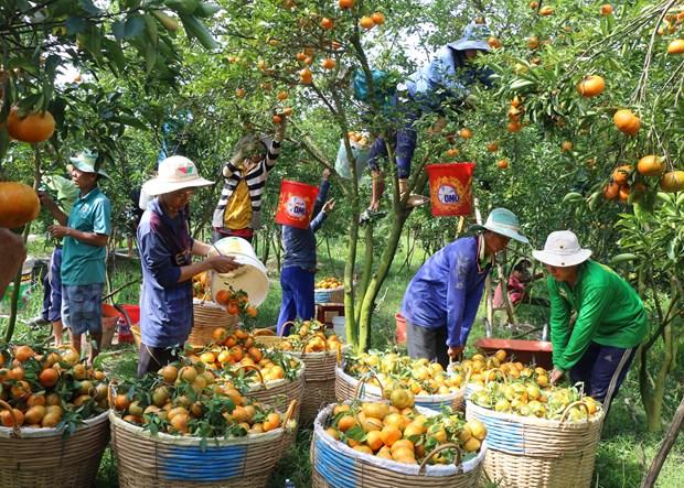 2017年越南蔬果出口额达34.5亿美元 创下新纪录 hinh anh 1