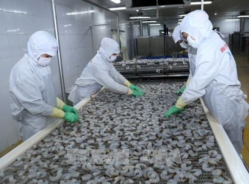 越南水产品出口面临许多挑战 hinh anh 1