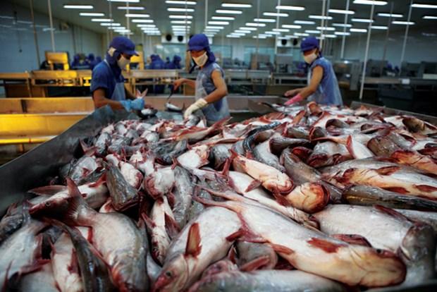2018年越南将努力扩大查鱼出口市场 hinh anh 1