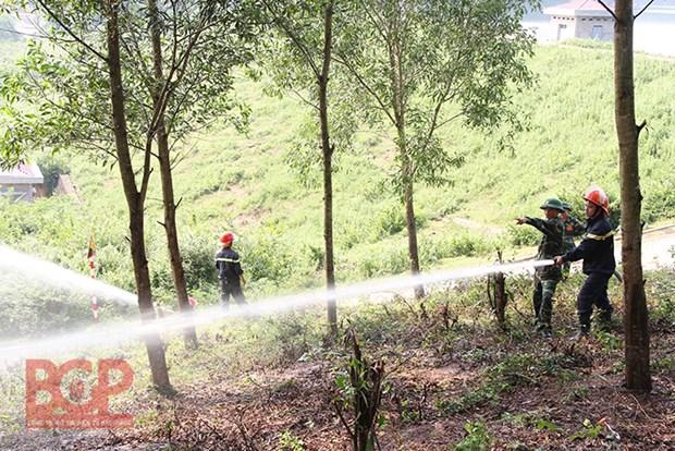 北江省加强森林资源保护管理工作 hinh anh 1