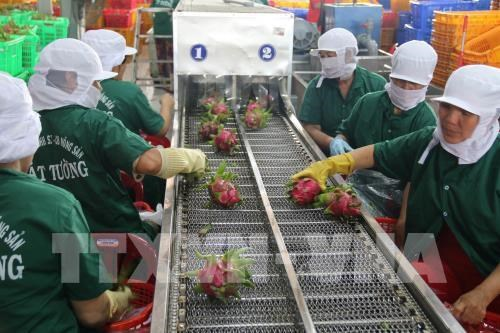 越南蔬果销往世界40个国家和地区市场 hinh anh 1