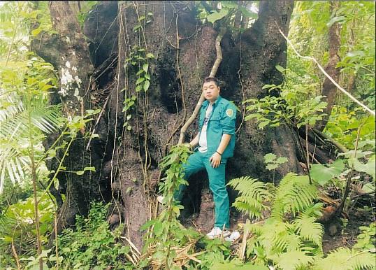昆山岛国家公园3大古老树木被列入越南遗产树名录 hinh anh 1