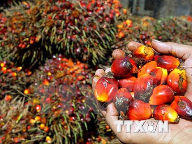 马来西亚棕榈油需求量猛增 hinh anh 1