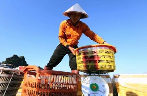 2018年1月份越南农林水产品出口总额超过30亿美元 hinh anh 1