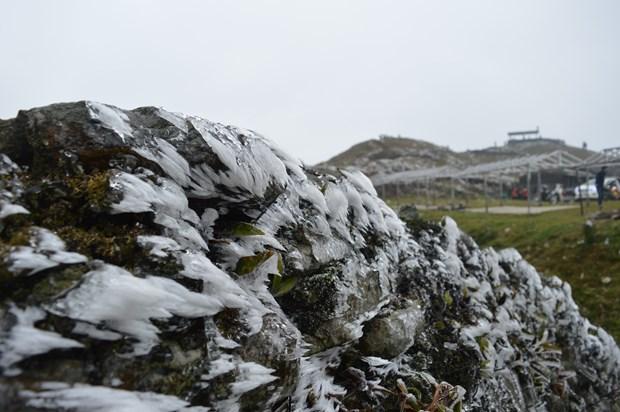 北部和北中部各省市主动采取措施应对严寒天气和寒害影响 hinh anh 1