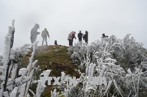 下雪天气 母山旅游景区游客量猛增 hinh anh 1