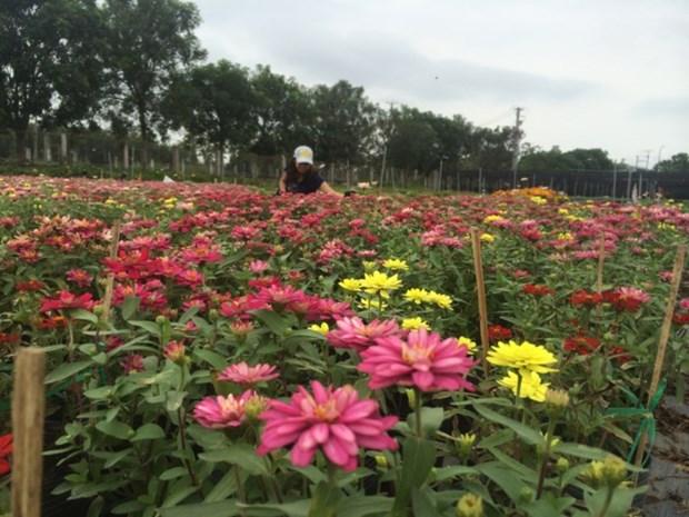 同塔省沙沥村独特花卉盆景吸引游客青睐 hinh anh 1