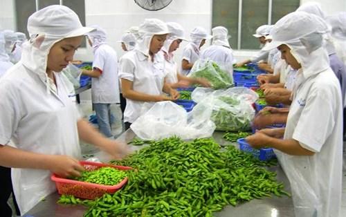 2018年1月越南蔬果出口额约达3.21亿美元 hinh anh 1