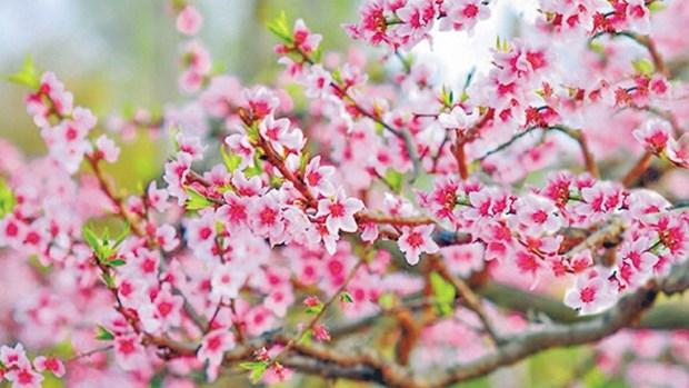 新春催促与呼唤 hinh anh 1