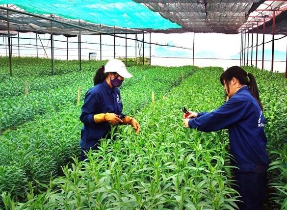 河内市促进高科技农业生产模式建设 hinh anh 1