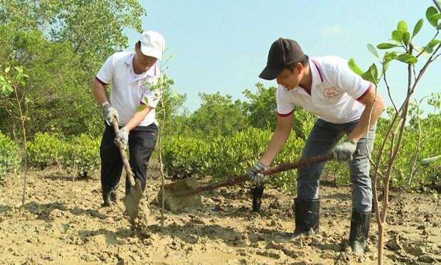 胡志明市通过海滨植树造林来应对气候变化 hinh anh 1