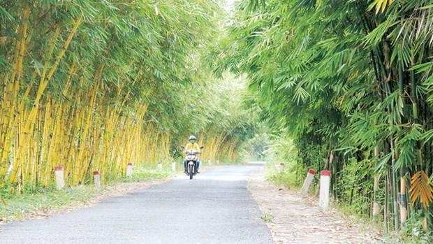 同塔省收集和种植60多种竹子 hinh anh 1