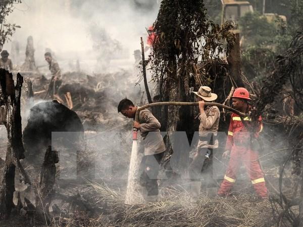 印度尼西亚因森林火灾而进入紧急状态 hinh anh 1