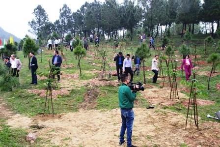 承天顺化省努力完成2018年的森林资源保护与发展任务 hinh anh 1