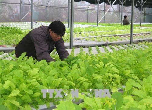 广治省投入1600多亿越盾发展高科技农业 hinh anh 1